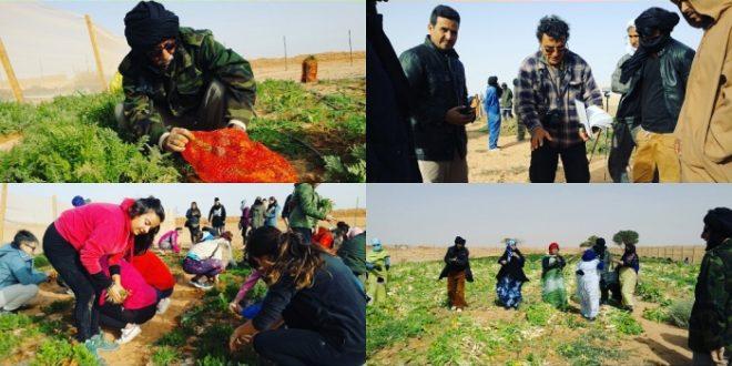 رئيس الجمهورية يشرف على انطلاق الحملة الزراعية لحصاد الموسم الفلاحي لسنة 2018/2019